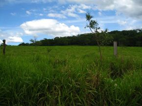 Incorporating trees into Brazilianagriculture
